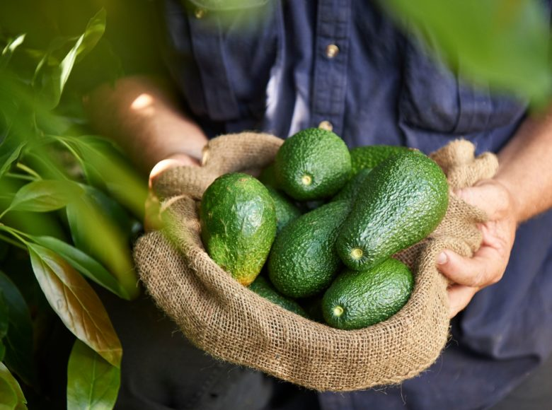 Southern Forests Valleys Pemberton Avocados Credit Frances Andrijich web